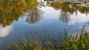 Een weerspiegeling van de herfst in de vijver in het Park nave Stock Foto's