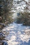 Een weg Stock Foto