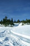 Een weg aan het bos Stock Fotografie