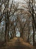 Een weg aan het uiteinde van het spit in Len Ford Park in Toronto, Ontario, Canada De winter van 2019 royalty-vrije stock afbeeldingen