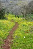 Een weg in bloeiend bos Royalty-vrije Stock Afbeelding