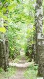 Een weg in de Berksteeg Royalty-vrije Stock Foto's