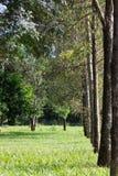Een weg die door bomen wordt ontworpen Stock Afbeelding