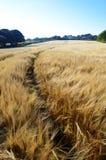 Een weg die door een graangebied leiden Stock Foto