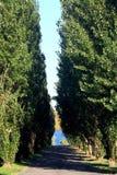 Een Weg door de Bomen Royalty-vrije Stock Afbeelding