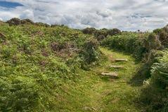 Een Weg door de Gaspeldoorn in Botallack Cornwall stock afbeeldingen