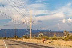 Een Weg door de Woestijn van Arizona royalty-vrije stock fotografie