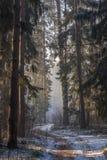Een weg door een bos Royalty-vrije Stock Fotografie