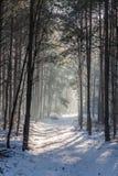Een weg door een bos Royalty-vrije Stock Foto's