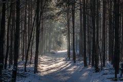 Een weg door een bos Royalty-vrije Stock Foto