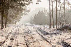 Een weg door een bos Stock Afbeeldingen