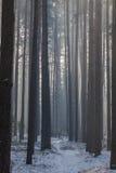 Een weg door een bos Stock Fotografie