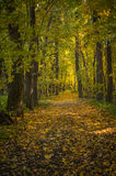 Een weg door het de herfstbos Royalty-vrije Stock Afbeelding