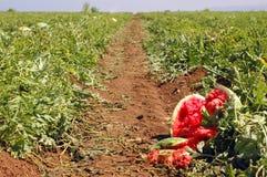 Een weg door het gebied van een watermeloen Royalty-vrije Stock Afbeeldingen