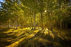 Een weg door het hout Stock Afbeelding