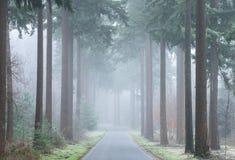 Een weg door mistige het meest forrest in de herfst stock afbeeldingen