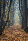 Een weg door paradijs stock afbeelding