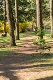 Een weg door sommige bomen vroeg in de ochtend, in springtim royalty-vrije stock afbeeldingen