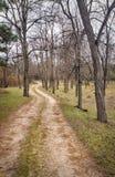 Een weg in een mooi bos Stock Foto
