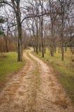 Een weg in een mooi bos Stock Foto's