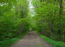 Een weg in esdoornpark. Stock Foto's