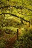Een weg in het bos Stock Fotografie