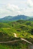 Een weg in het bos Royalty-vrije Stock Foto's
