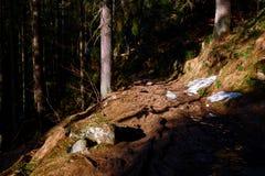 Een weg in het bos royalty-vrije stock afbeeldingen
