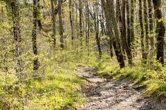 Een weg in het de lente zonnige bos stock afbeelding