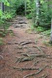 Een weg in het hout stock fotografie