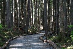Een weg in het hout Stock Afbeeldingen