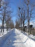 Een weg in het park in de winter Stock Foto