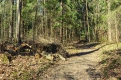 Een weg in het Pavlovsk Park Royalty-vrije Stock Foto