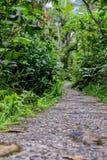 Een weg in het regenwoud stock fotografie