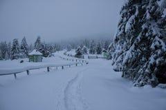 Een weg in het snow-covered bos Royalty-vrije Stock Foto's
