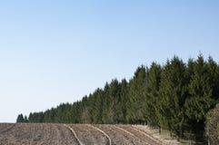 Een weg langs het bos royalty-vrije stock foto's