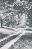 Een weg met bomen Royalty-vrije Stock Fotografie