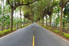 Een weg met boom wordt omringd die Royalty-vrije Stock Afbeeldingen