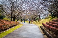 Een weg met de bomen en de bloemen van Sakura in tuin van Ushiku Daibutsu, Japan stock afbeelding