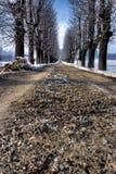 Een weg met vorst in monferrato, noordwestenitalië royalty-vrije stock afbeelding