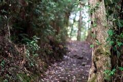 Een weg in Noordelijk Tasmanige bij een natuurreservaat royalty-vrije stock foto's