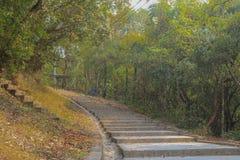 Een weg op bos royalty-vrije stock afbeeldingen