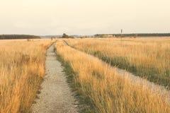 een weg op het gebied kijkt als gouden stock afbeeldingen