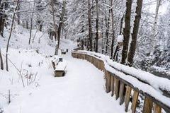 Een weg in een sneeuwpark Royalty-vrije Stock Fotografie