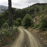 Een weg tussen de bomen stock foto's