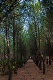 Een weg van bomen Stock Foto