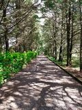 Een weg van bomen royalty-vrije stock foto's