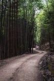 Een weg van de bossen van Bucovina ` s Royalty-vrije Stock Fotografie