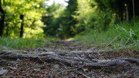 Een weg voerde met grote bomen met kleurrijk de lentegebladerte Stock Afbeeldingen