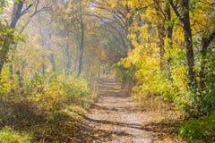 Een wegtrog een gouden de herfstbos in nevel Royalty-vrije Stock Foto